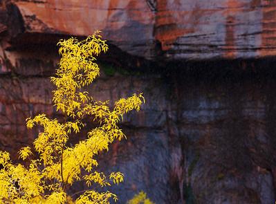 Yellow Autumn, Dark Cliffs