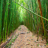 Bamboo Forest Trail found about midway on the PIpiwai Trail in Haleakala National Park, Maui.  This is the coolest trail and one of the most unique I've ever done.  The huge bamboo forest engulfs all hikers into a whole new universe until you reach the end of the trail at a spectacular waterfall.