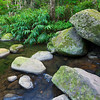 Along the 13 crossings hike (Makamakaole Stream) in West Maui  some lush ferns and trees mix with large boulders.
