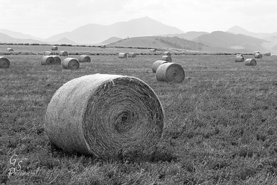 Autumn Fields towards the end of the season, these rolls of hay were bundled up for winter storage