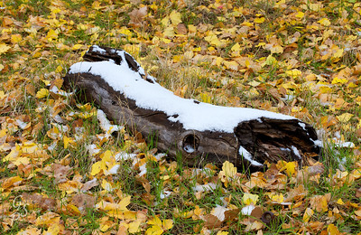 Fallen Log, First Snow