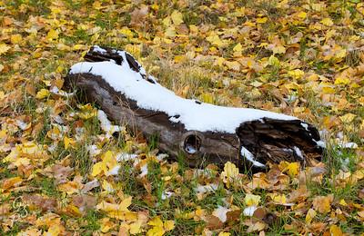 Fallen Log, First Snow