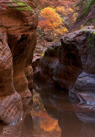 Orange Tree Reflected in Slot Canyon