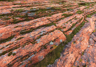 Moss and Sandstone
