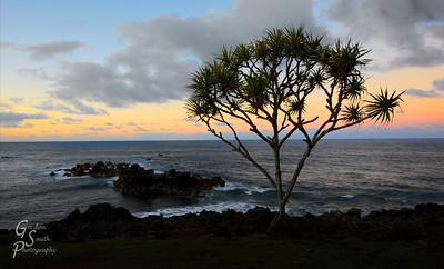 """Nahiku Sunset Nahiku landing, the furthest point you can go without dropping off the north shore of Maui, is where I fortuitously arrived at the end of the great day photographing the lovely and incomparable """"road to Hana"""".  The clouds and sky color made a great backdrop for this peaceful tree."""