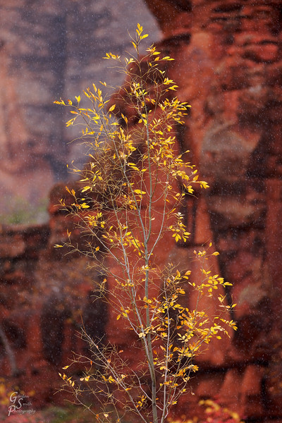 Fall Turns to Winter<br /> During a snow flurry, I photographed this isolated tree branch in Zion national park.  Most leaves had fallen off but a few remained and stood out from the red cliffs of Zion Canyon.