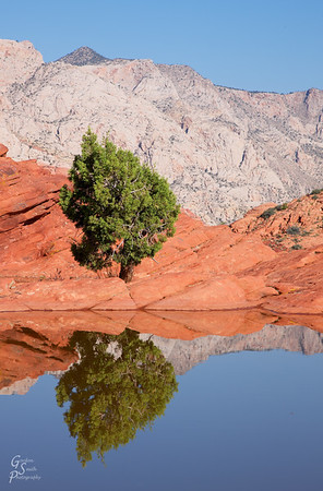 Small Tree and Reflection from Snow Canyon State Park.  I like this telephoto landscape with the lovely picturesque tree and distant white cliffs