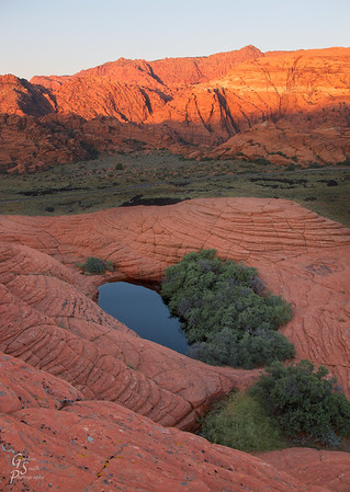 "Petrified Pools in Snow Canyon state park.  This small pool and vegetation set amid the sandstone formed a beautiful pocket of life.  The sandstone formations are often called the ""petrified sand dunes"""