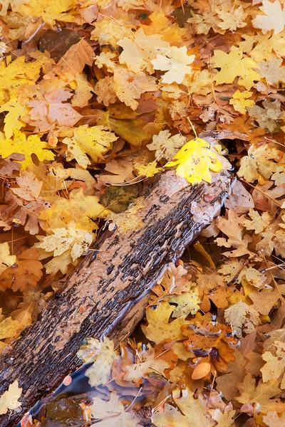 Leaves in a Bog