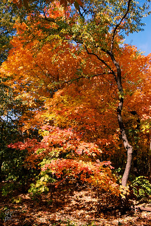 Spectacular Autumn Trees in New England