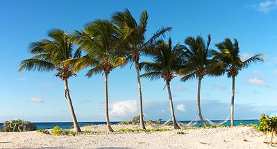 Cow Wreck Beach Palms