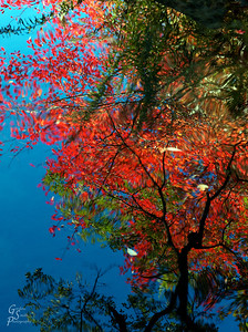 Red Twisted Reflection in a pond of Central Park