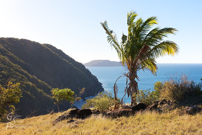 Palm Tree and Great Tobago Island