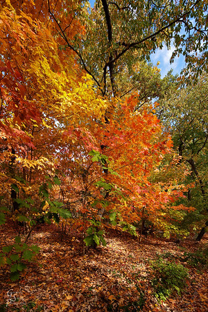Fall Favorite for Color from the East Coast