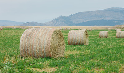 Hayfields and Mountains in Montana's plains area.