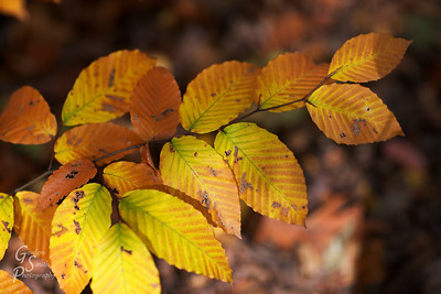 Autumn Leaves a pretty branch