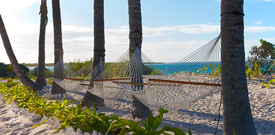 Six Palms, Three Hammocks