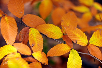 Leaves of the same Branch a love auburn color