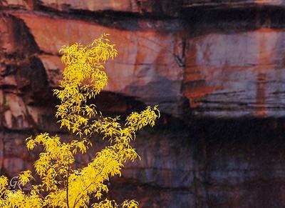 Yellow Leaves, Orange Cliffs