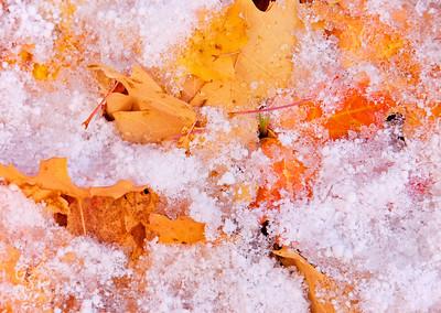 Snow on Orange