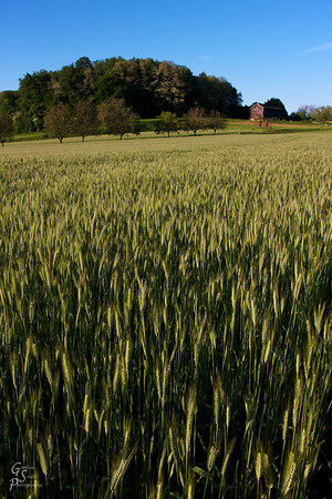 Dordogne Farm