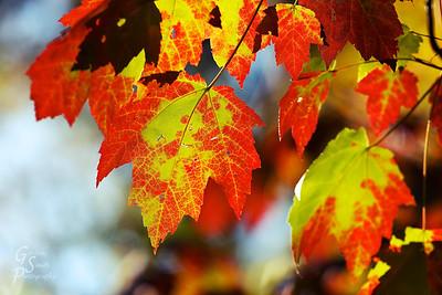 Shining Through the thin leaves