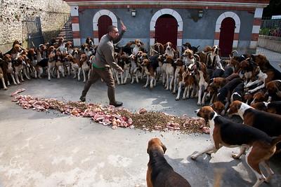 Feeding Hunting Dogs