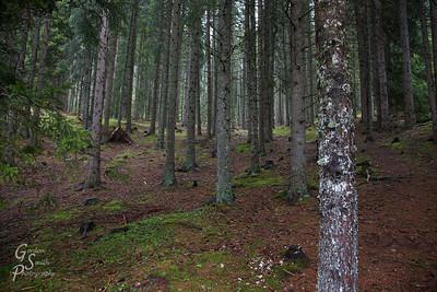 Puez Odle Forest