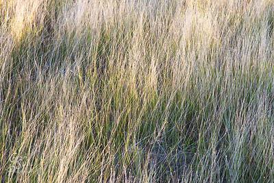 Caribbean Grasses