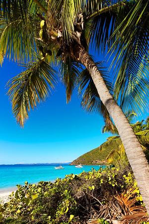 Caribbean View