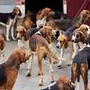 Cheverny Dogs