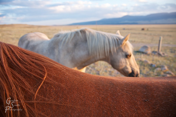 Horseback<br /> a view from the ranch in Montana