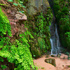 Ferns and Falls