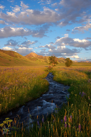 Mountain Stream and Grasses coming from Wolf Mountain in Montana's Madison range.  Lupine wildflowers and beautiful sunset light are beautiful.