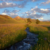 Mountain Stream and Grasses