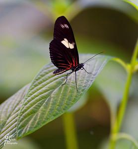 Leaf Landing Butterfly