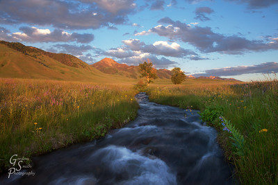 Streaming Nature in Montana's big land