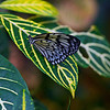 Lined Leaf and Butterfly