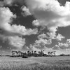 Everglade Clouds<br /> Beautiful vast grasslands spread for miles and miles in the Florida Everglades national park.  Beautiful pine tree clusters dot the landscape.