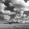 Everglade Clouds