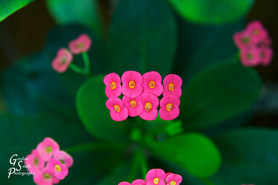 Eight Tiny Flowers