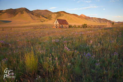 Grass and Cabin in Madison valley