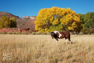 Southwestern Pony