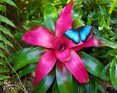 Pink Flower, Blue Butterfly