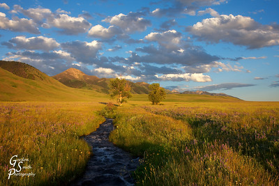 Late, Late Afternoon in the Madison Valley, Montana.  The gorgeous clouds and colorful grasses were unforgettable.