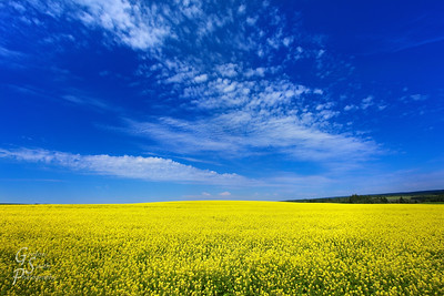 Mustard Hill is located in a lovely field outside Ashton, Idaho.  What a beautiful sight!