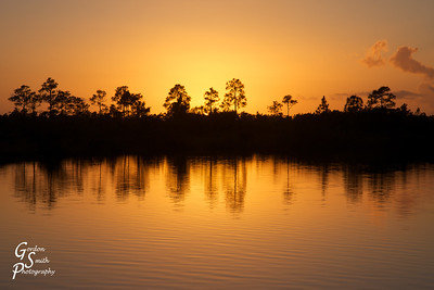 Amber Sunset over Pine Glade Lake, Everglades Florida.  Pine Tree silhouettes reflect off the amber water.