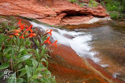 Flowers Overlooking Falls