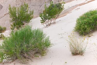 White Sand Slope with Green Desert Garden