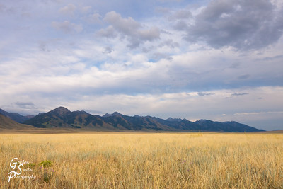 Grassland of Montana in the Madison River valley